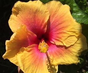 belleza, elegancia, and flor image