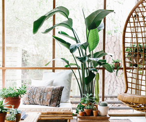 decorating, home, and plants image