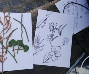 drawing, flower, and nature image