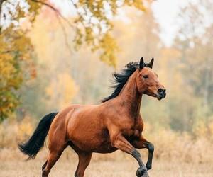 تفسير الحصان و الفرس في الحلم لابن سيرين