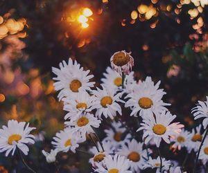 flowers, nature, and ромашки image