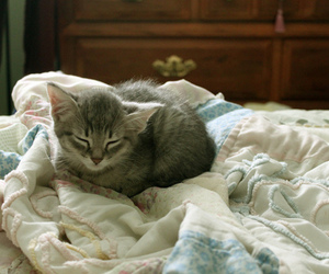 cat, bed, and kitty image