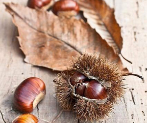 autumn, fall, and chestnut image