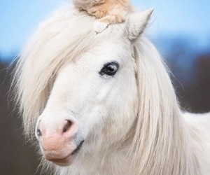 animals, cat, and friendship image