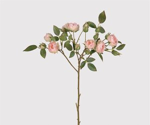 pale pink and rose image