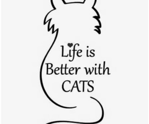 cat, love, and life image
