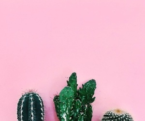 cactus, drawing, and plants image