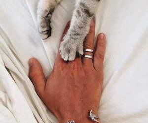cat, hand, and pet image