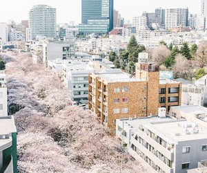 japan and aesthetics image