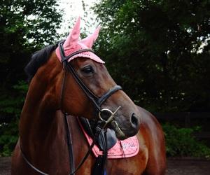 equestrian, horse, and springpferd image