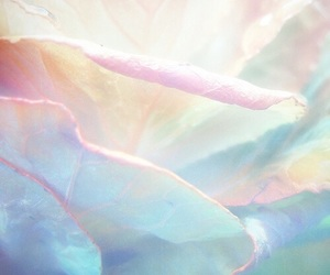 pastel, theme, and flowers image