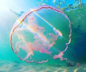 animal, jelly fish, and jellyfish image