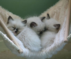 kittens, cute, and animals image