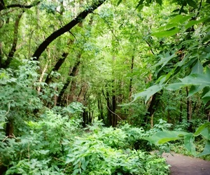 forest, green, and peaceful image