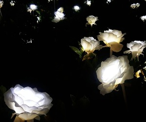 flowers, aesthetic, and lights image