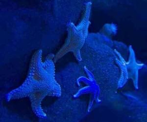 other, starfish, and wallpicture image