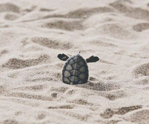 turtles and cute image