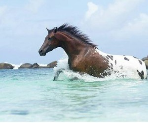 horses and best sport image