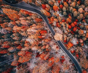 autumn, fall, and beautiful image