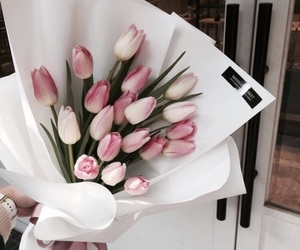 aesthetic, pink and white, and tulips image