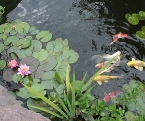 fish, nature, and water image