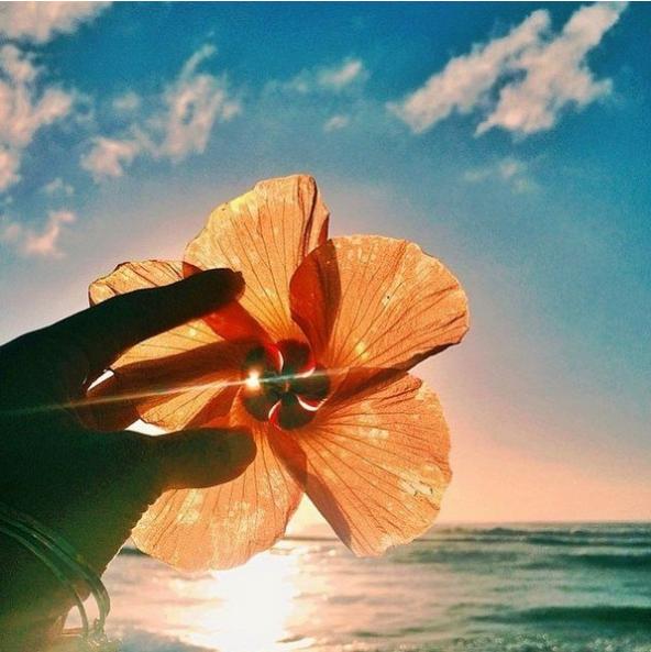 flowers, beach, and sky image