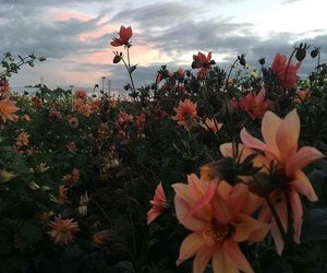 flowers, sky, and alternative image