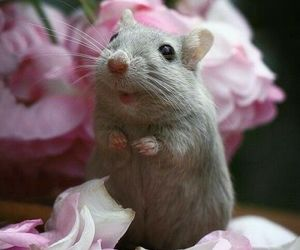 mouse and animal image