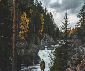 alone, forest, and girl image