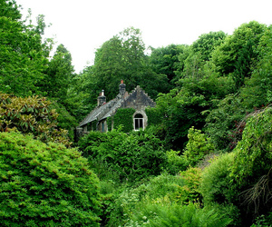 house, greenery, and nature image
