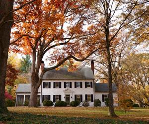 autumn, fall, and fall colors image