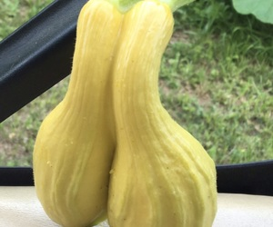 Image by The Ugly Fruit & Veg Campaign