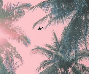 palms, pink, and nature image