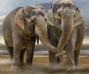 couple, elephants, and wild animals image