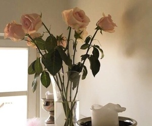 flowers, theme, and rose image