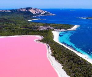 pink, nature, and australia image