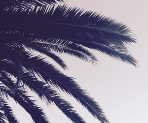 beach, palm trees, and travel image