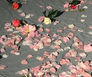 petals, rainbow, and rose image