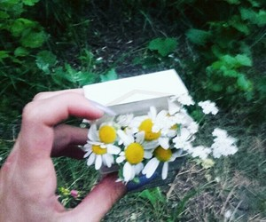 cigarette, daisy, and hands image