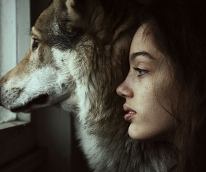 girl, wolf, and animal image
