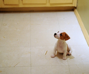 adorable, dog, and kitchen image