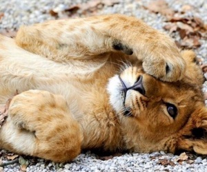 lion, cute, and animal image
