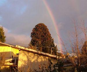rain, sun, and tree image
