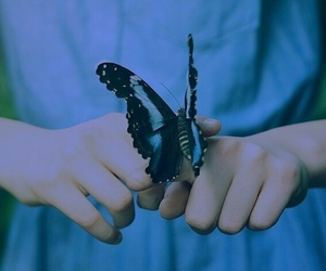 butterfly, blue, and dress image