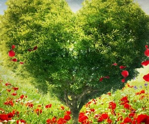 flowers, heart, and nature image