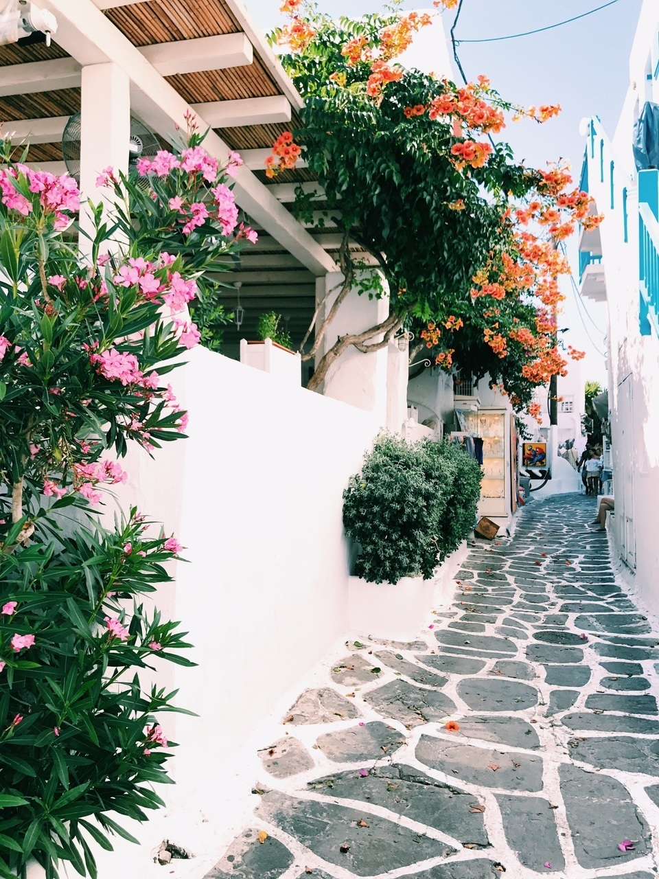 flowers, Greece, and lovely image