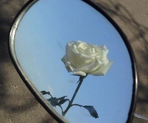 rose, white, and mirror image