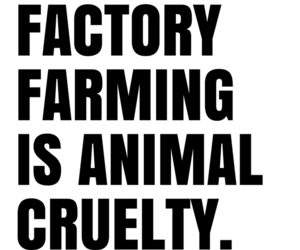 animal cruelty, animal rights, and compassion image