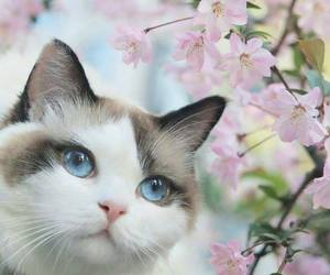 cat, blossom, and flowers image