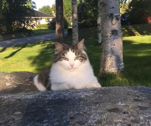 cat, outside, and cute image